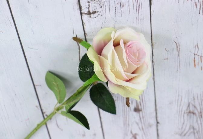 2625ada096378d Róża gał. CT80 (6 szt x 2,50 zł) ivory - Sklep internetowy TERJAN ...