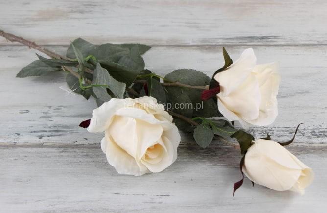 d5c456df431111 Róża gał.