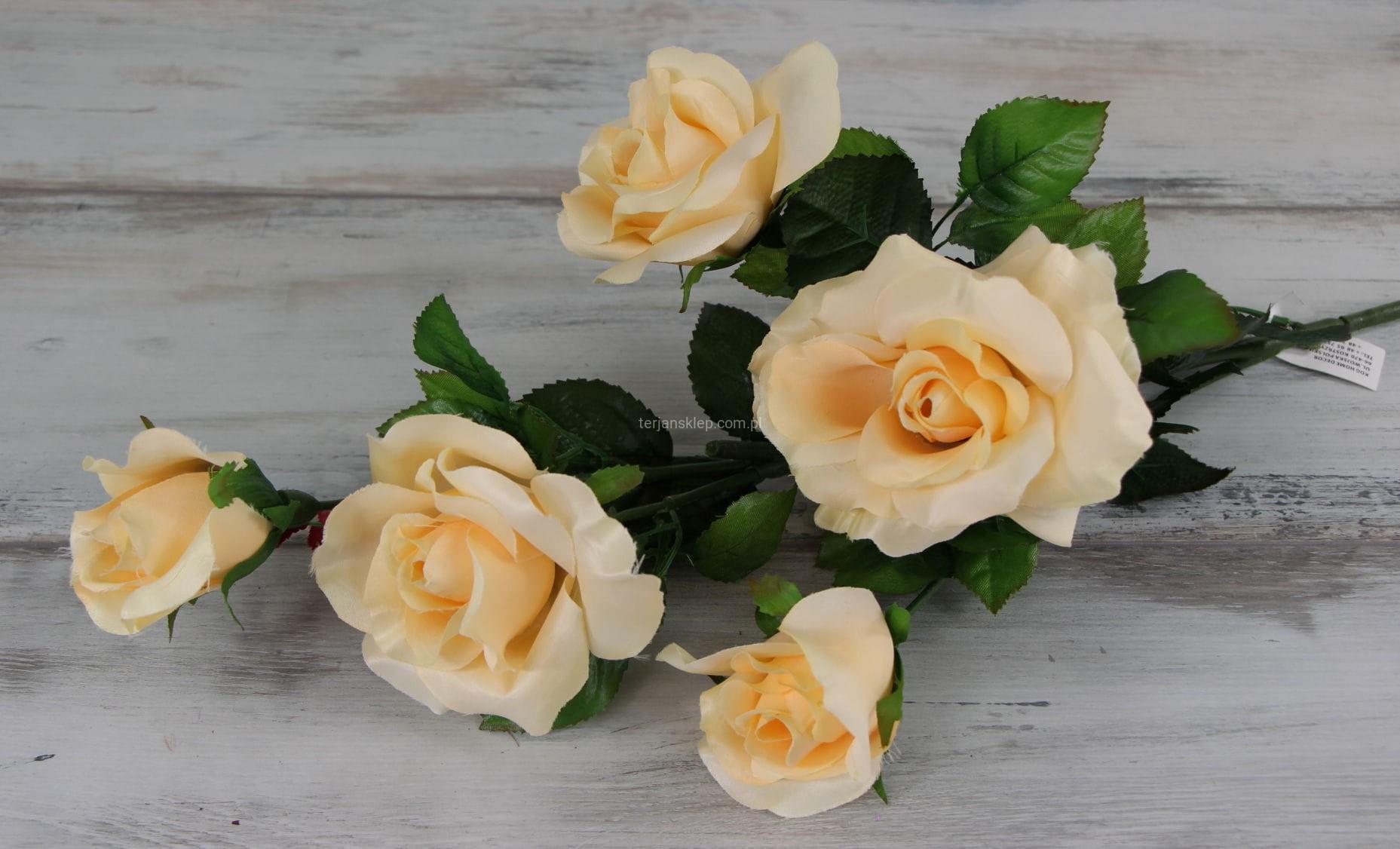 1ba6f166624c44 Róża gał. C1237 A/C masełkowa - Sklep internetowy TERJAN hurtownia ...