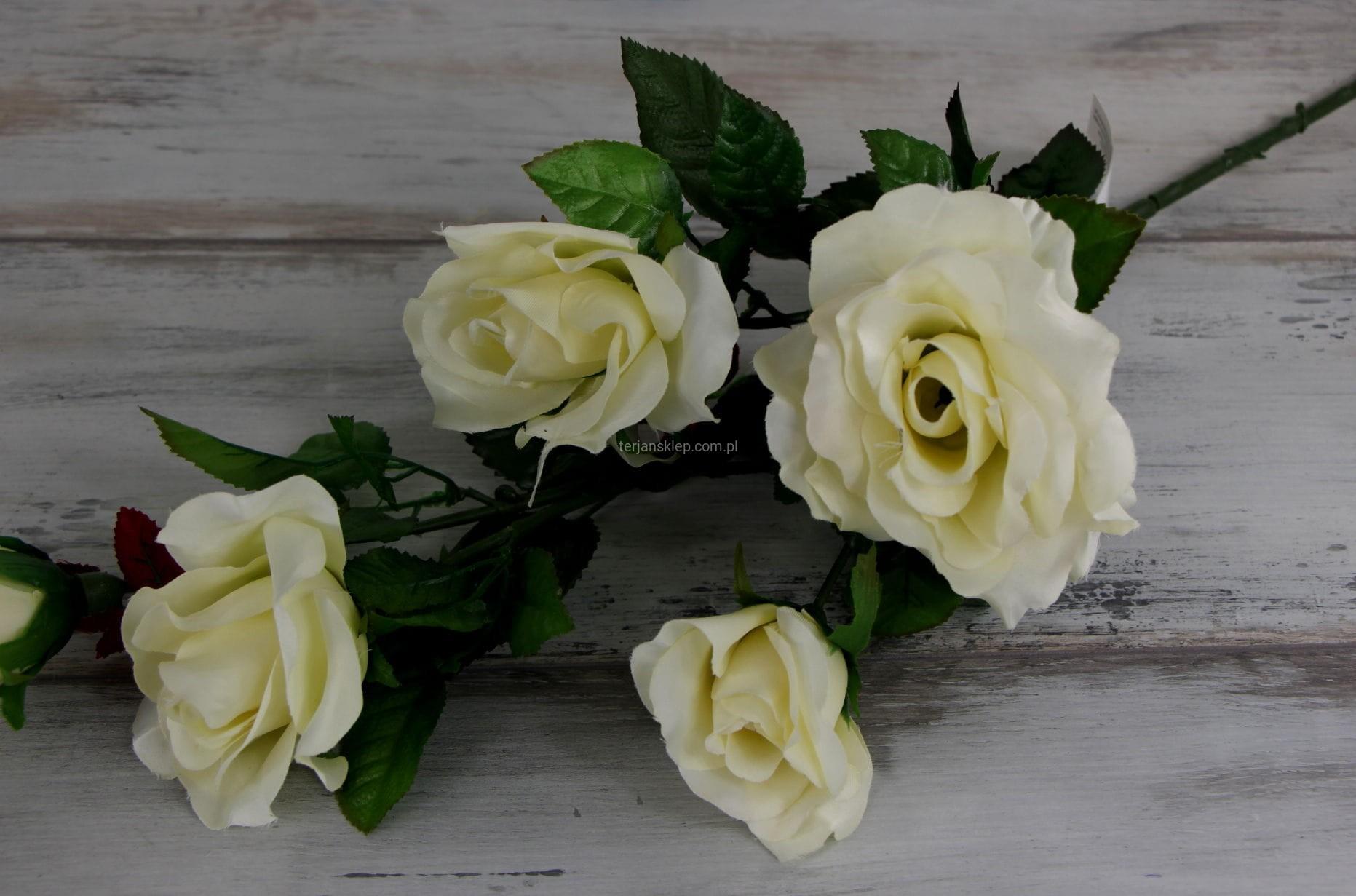 01b691ff710e44 Róża gał. C1237 B krem - Sklep internetowy TERJAN hurtownia kwiatów ...