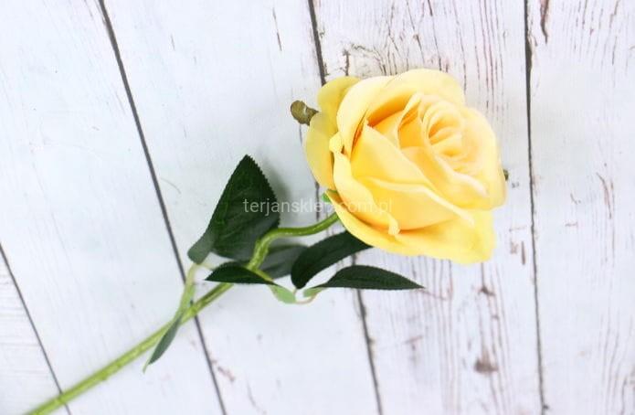 82cbf78b0616f3 Róża gał. CT80 (6 szt x 2,50 zł) lt yellow - Sklep internetowy ...