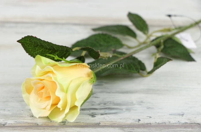 330e91c147217c Róża gał. SUN411 (6 szt x 2,40 zł) lt peach #1581 - Sklep ...