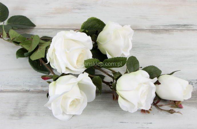 6878a4b0123f6c Róża gał. CS233 D (krem) - Sklep internetowy TERJAN hurtownia ...