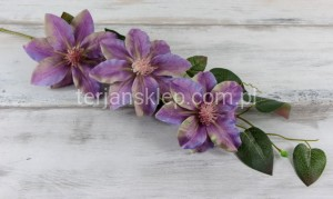 Clematis CC505 B/ CC490 (fiolet/lila cieniow.)