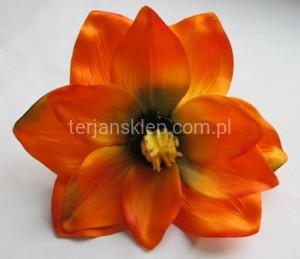 Magnolia C368 / CM520 (orange E) 12 x 1,70 zł