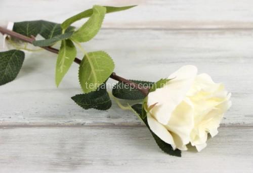 42bba4c85b094f Róża gał. CV06236 (6 szt x 2,60 zł) cream #1 - Sklep internetowy ...