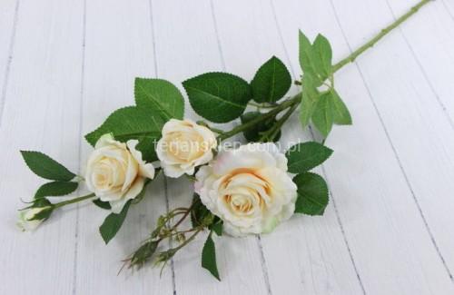 552f3b774198bd Gał. róża