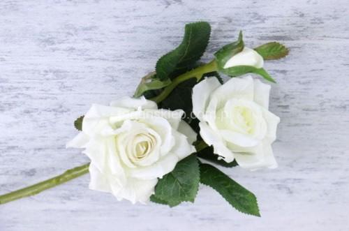 cad1f63058569c Róża gał.