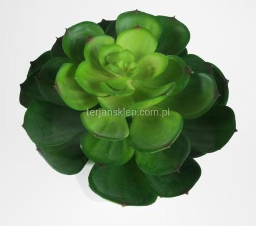 Kaktus Kapusta W Ceramicznej Doniczce Yd141 Zieleń