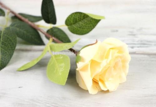96b5001754d4eb Róża gał. CV06236 (6 szt x 2,60 zł) lemon #2 - Sklep internetowy ...